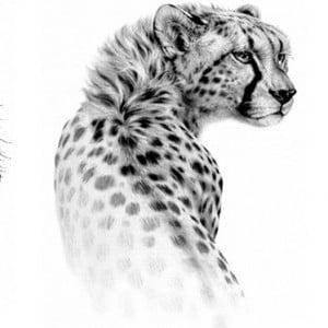 Temporary Tattoo TH-227 Cheetah Sketch